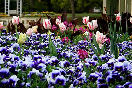 A lovely flower garden