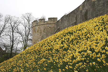 Medieval portion of the city wall