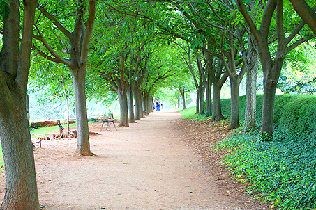A view down Mulberry Row runs parallel to the gardens