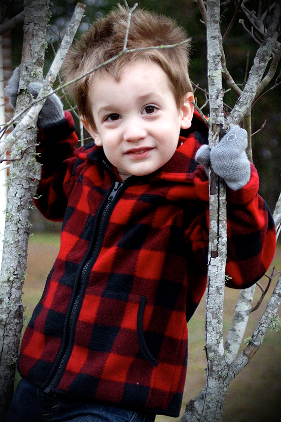 Calvin climbs the smallest Dogwood in our front yard
