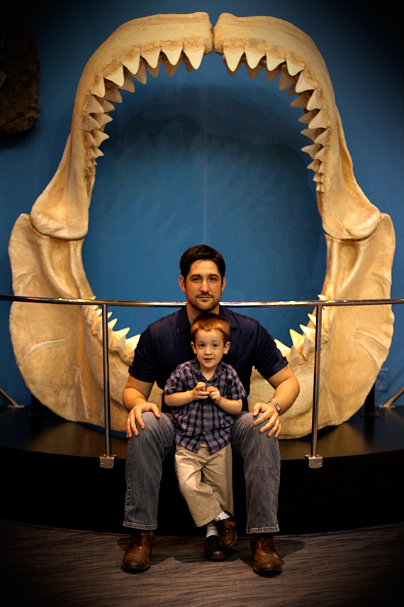 Life-size replica of the jaws of Megalodon—perhaps a pre-Flood version of the Great White