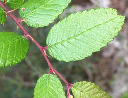 Flora# 5414