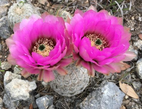 Flora# 5594